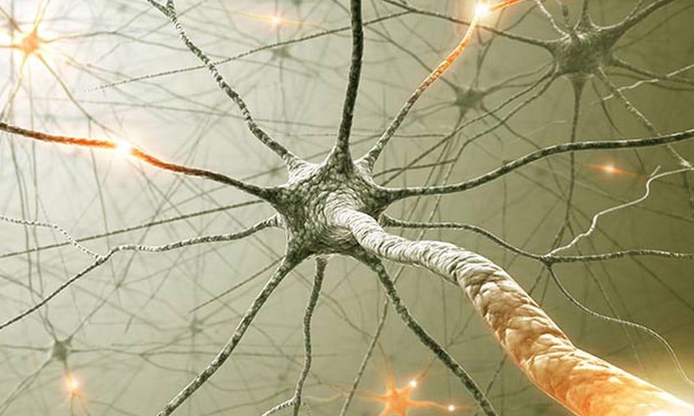 LES LIENS CORPS-ESPRIT : LA FIN DE TOUT-NEURONAL